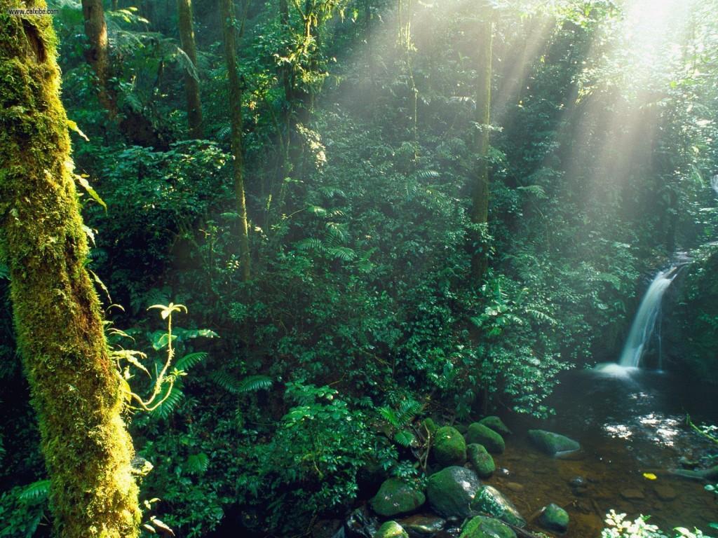 Monteverde_Cloud_Forest_Costa_Rica