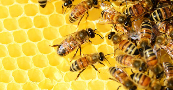 3 Ways You Can Help Keep The Bee Population From Dying Off (Colony Collapse Disorder)
