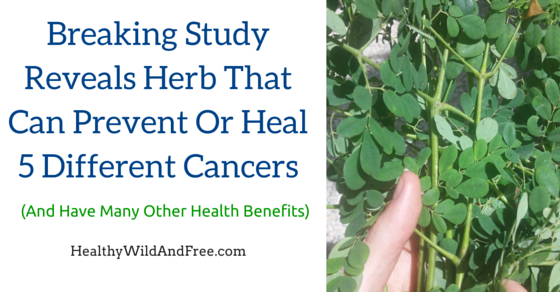 Breaking Study Reveals Herb That Can Cure 5 Different Cancers