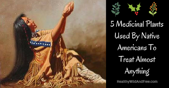 5 Medicinal Plants You Never Heard Of Used By Native Americans
