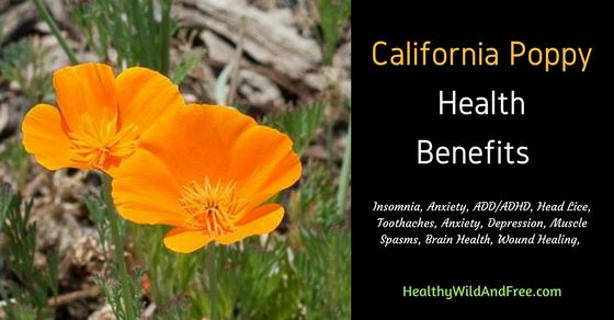 10 California Poppy Health Benefits