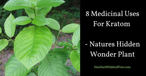 8 Medicinal Uses For Kratom – Natures Hidden Wonder Plant