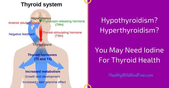 Hypothyroidism? Hyperthyroidism? You May Need Iodine For Thyroid Health