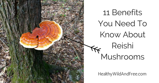 11 Benefits You Need To Know About Reishi Mushrooms