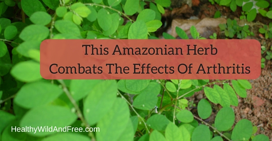 This Herb Helps To Combat The Effects Of Arthritis
