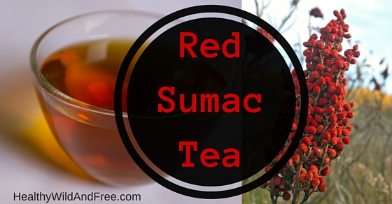 Red Sumac Tea (Free Wild Berry Recipe)