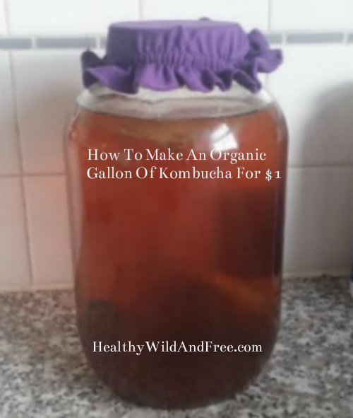 How To Make A Gallon Of Organic Kombucha For $1