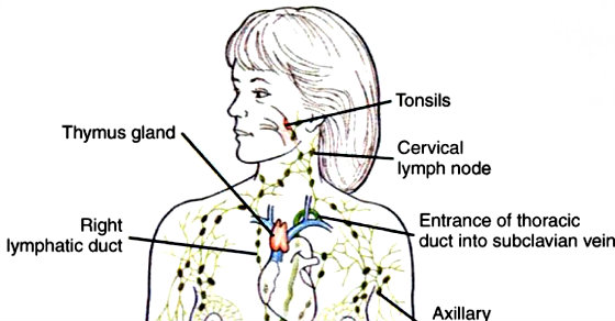 10 Ways To Empty Your Lymphatic System From Toxins Causing You To ...