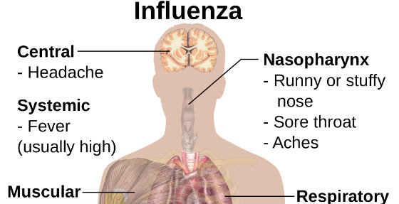 10 Powerful Ways to Avoid The Flu and Boost Immunity