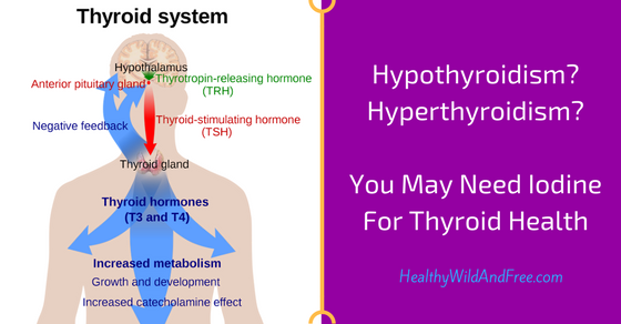 Hypothyroidism? Hyperthyroidism? You May Need Iodine For Thyroid Health