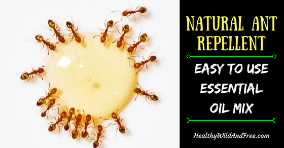 Natural Ant Repellent: Easy To Use Essential Oil Mix